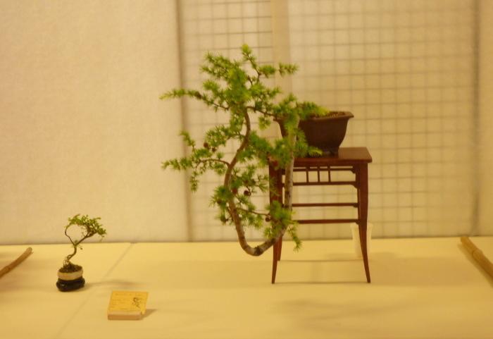 le club émeraude bonsaï  expose le 6 et 7 juin P1030331