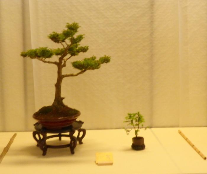 le club émeraude bonsaï  expose le 6 et 7 juin P1030333