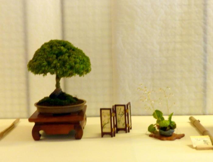le club émeraude bonsaï  expose le 6 et 7 juin P1030336