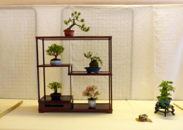 le club émeraude bonsaï  expose le 6 et 7 juin P1030337