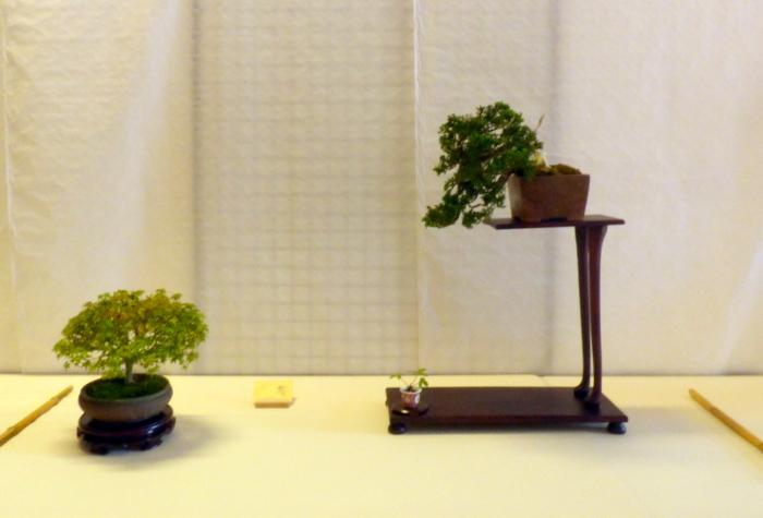 le club émeraude bonsaï  expose le 6 et 7 juin P1030338