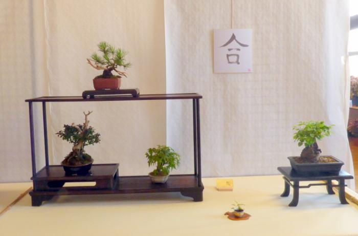 le club émeraude bonsaï  expose le 6 et 7 juin P1030340