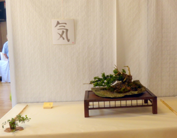 le club émeraude bonsaï  expose le 6 et 7 juin P1030341