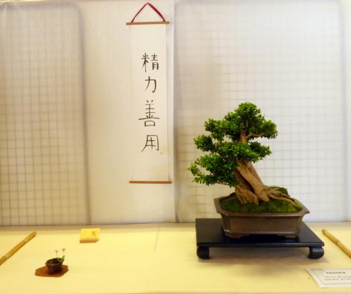 le club émeraude bonsaï  expose le 6 et 7 juin P1030344