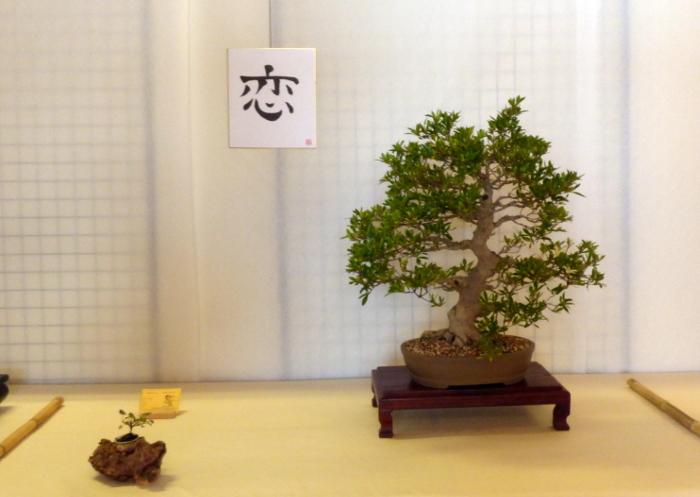 le club émeraude bonsaï  expose le 6 et 7 juin P1030345