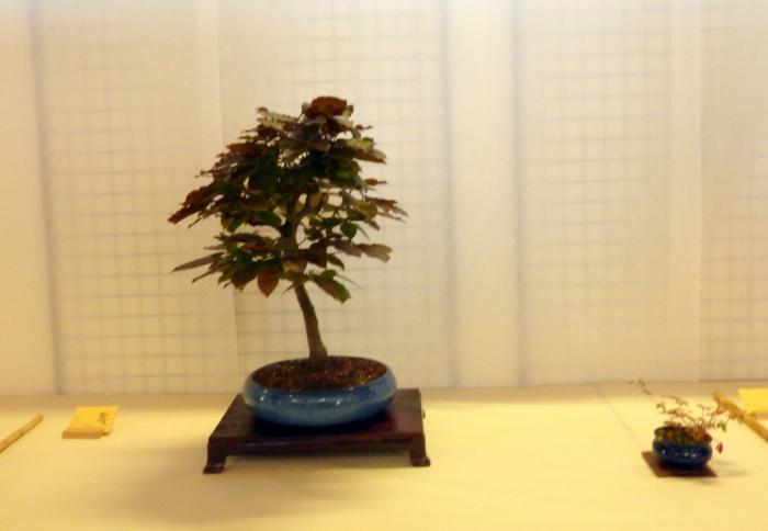 le club émeraude bonsaï  expose le 6 et 7 juin P1030346