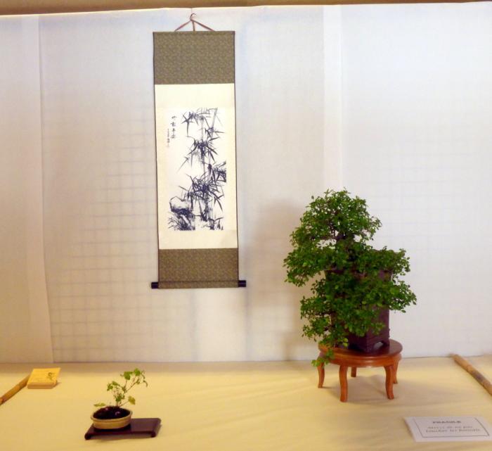 le club émeraude bonsaï  expose le 6 et 7 juin P1030347