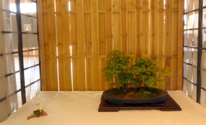 le club émeraude bonsaï  expose le 6 et 7 juin P1030349