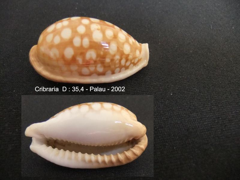 Cribrarula cribraria - (Linnaeus, 1758) - Page 2 Cribar10