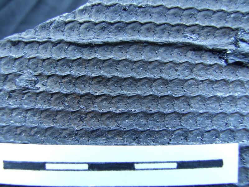 L Carboniferous of Poland Dscf2213