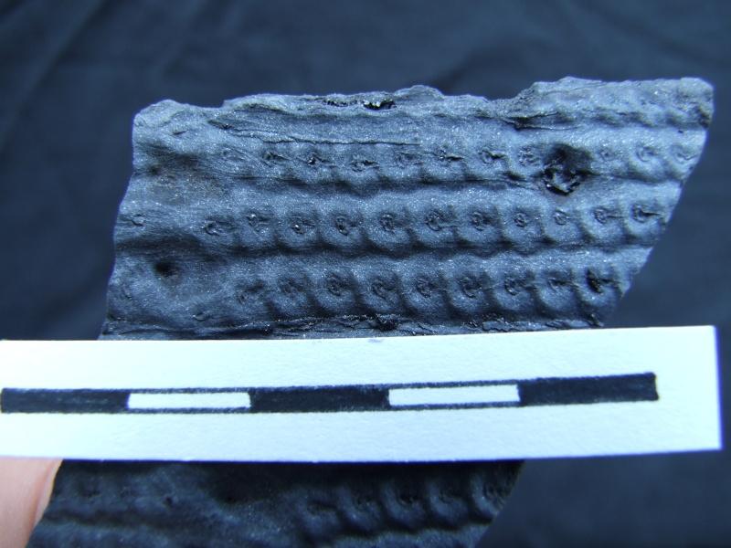 L Carboniferous of Poland Dscf2215