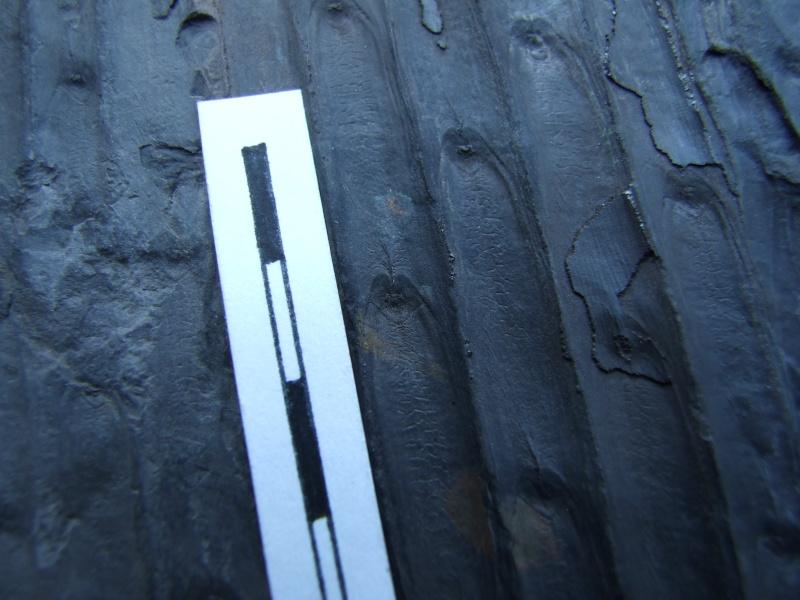 L Carboniferous of Poland Dscf2219