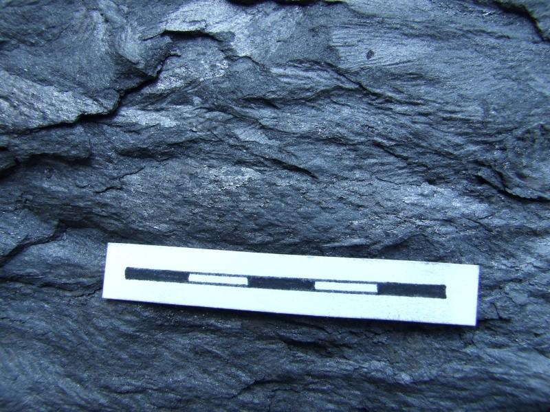 L Carboniferous of Poland Dscf2223
