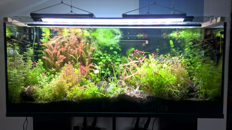2 aquariums 240L : Spécifique Cacatuoides et Communautaire Wp_20179