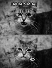 Meme Fights ! Kunky je te défie !!! D6e10