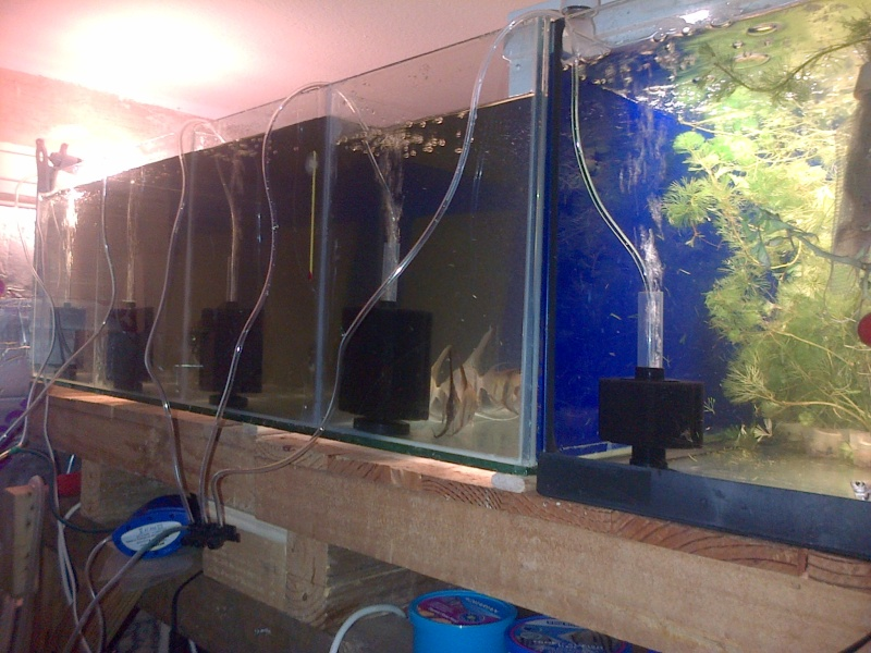 Deans Angels Fishroom - Page 2 Img-2014