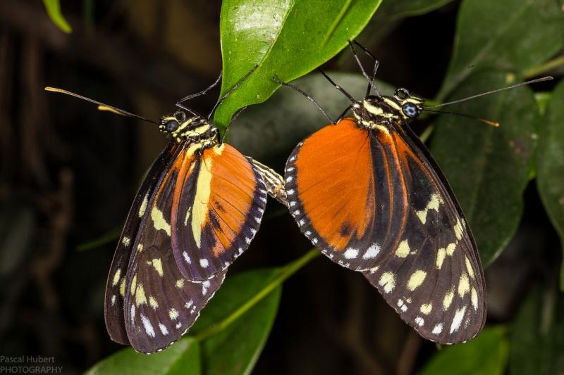 13 / 06 / 2015 - Remerchen / papillons à Grevenmacher  Photos Beluxp13