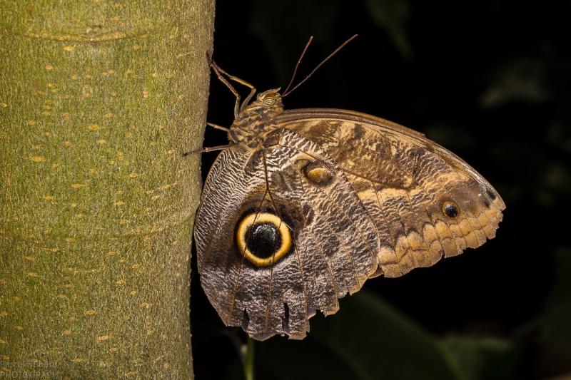 13 / 06 / 2015 - Remerchen / papillons à Grevenmacher  Photos Beluxp16