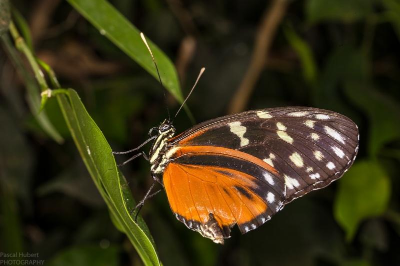 13 / 06 / 2015 - Remerchen / papillons à Grevenmacher  Photos Beluxp17
