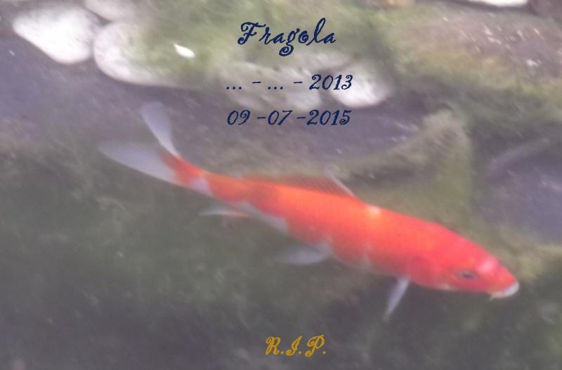 Laghetto 2.0 Fragol10