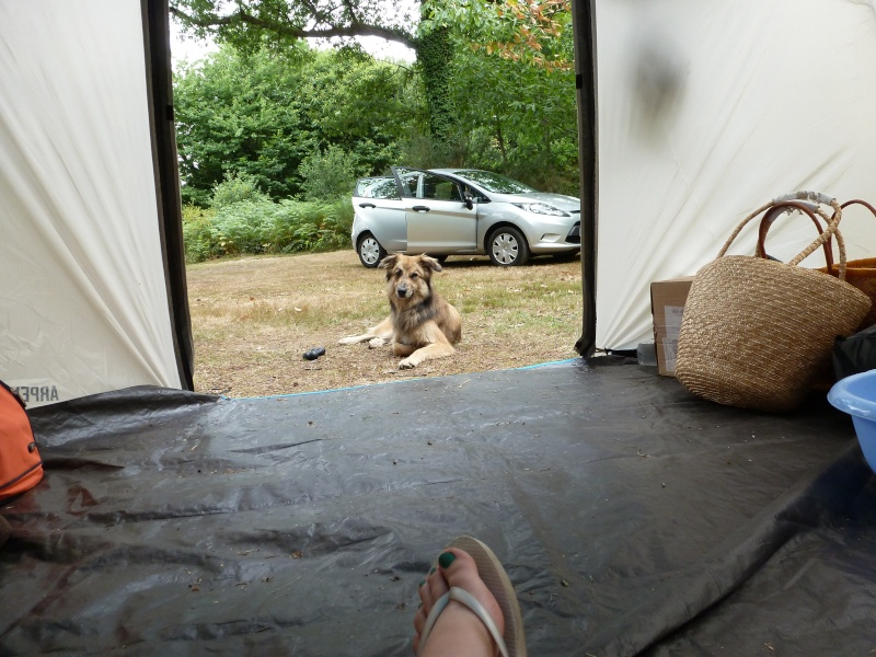 Nos bons plans vacances (Hotel ou autres) avec nos chiens ! P1040610