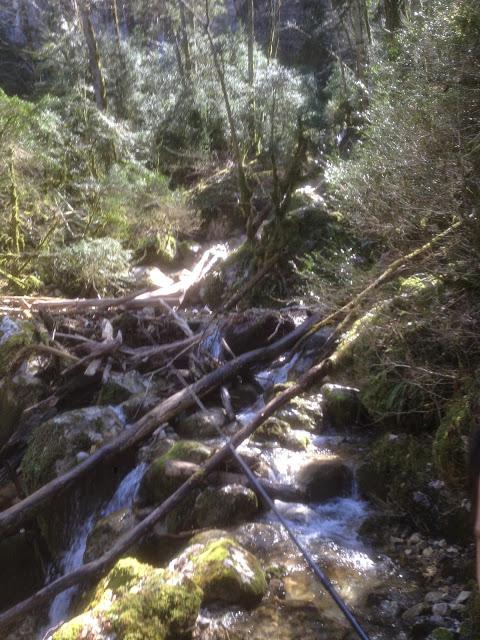 profitons de nos forêts Buis10