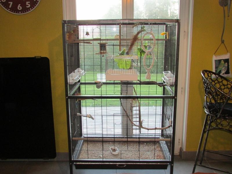Projet achat d'une cage pour un couple de perruches Img_2910