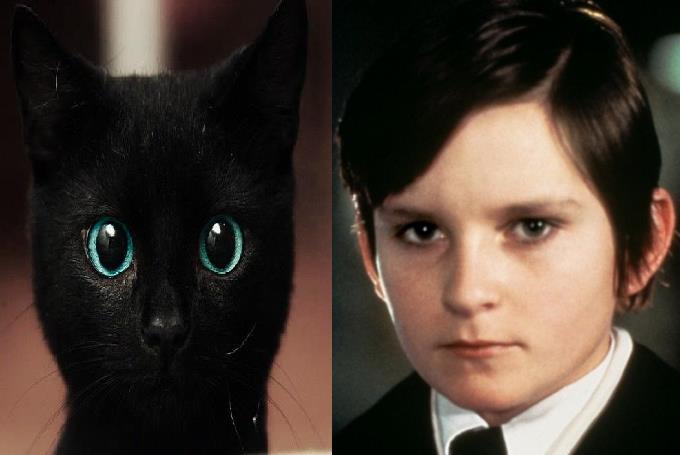 gatto nero Damien10