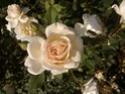 Nos amies les fleurs (Symbolisme) Wp_00011