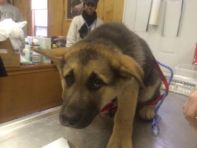 des animaux terrifiés par leur visite chez le vétérinaire 0115