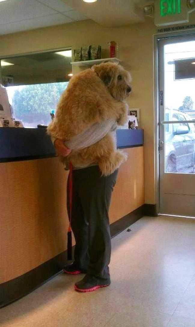 des animaux terrifiés par leur visite chez le vétérinaire 0213