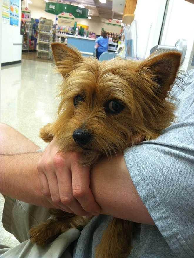 des animaux terrifiés par leur visite chez le vétérinaire 0614