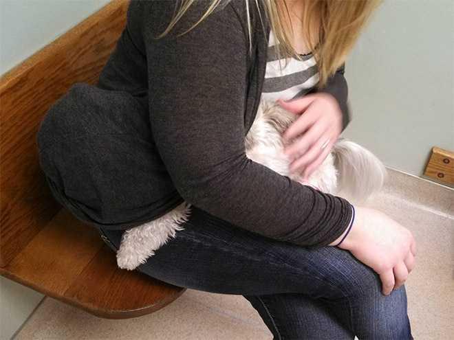 des animaux terrifiés par leur visite chez le vétérinaire 0915