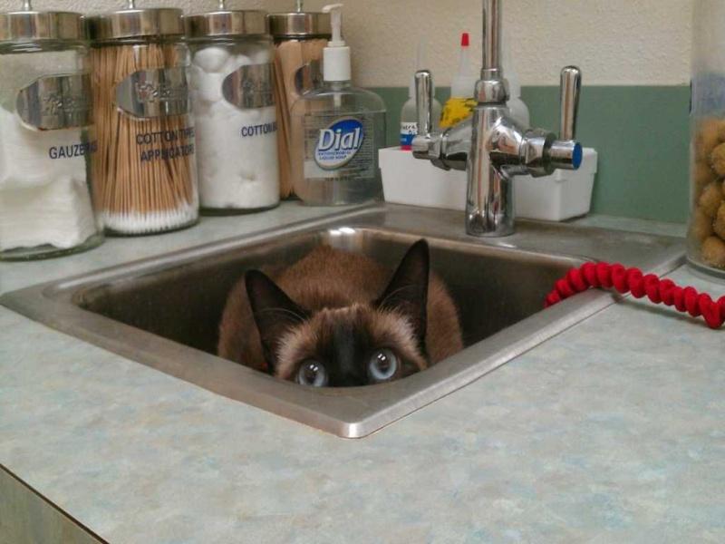 des animaux terrifiés par leur visite chez le vétérinaire 1311