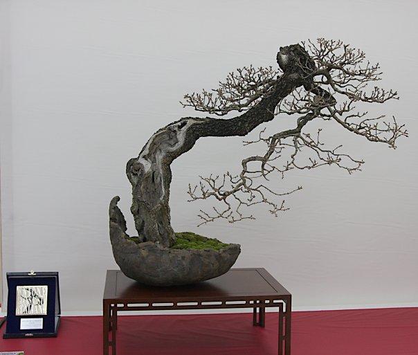 Portuguese Oak (Quercus Faginea) Litera10