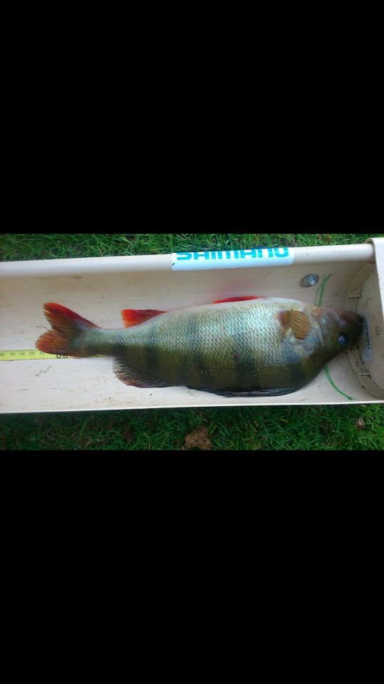 aappma limoges les ponticauds Street Fishing 2015 Perche10