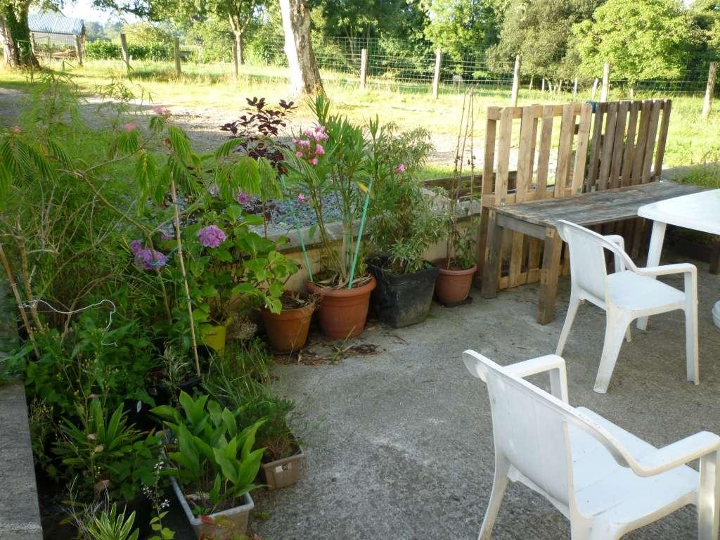 Balcons, Terrasses et Jardins...Plantes et Aménagements... P1050714