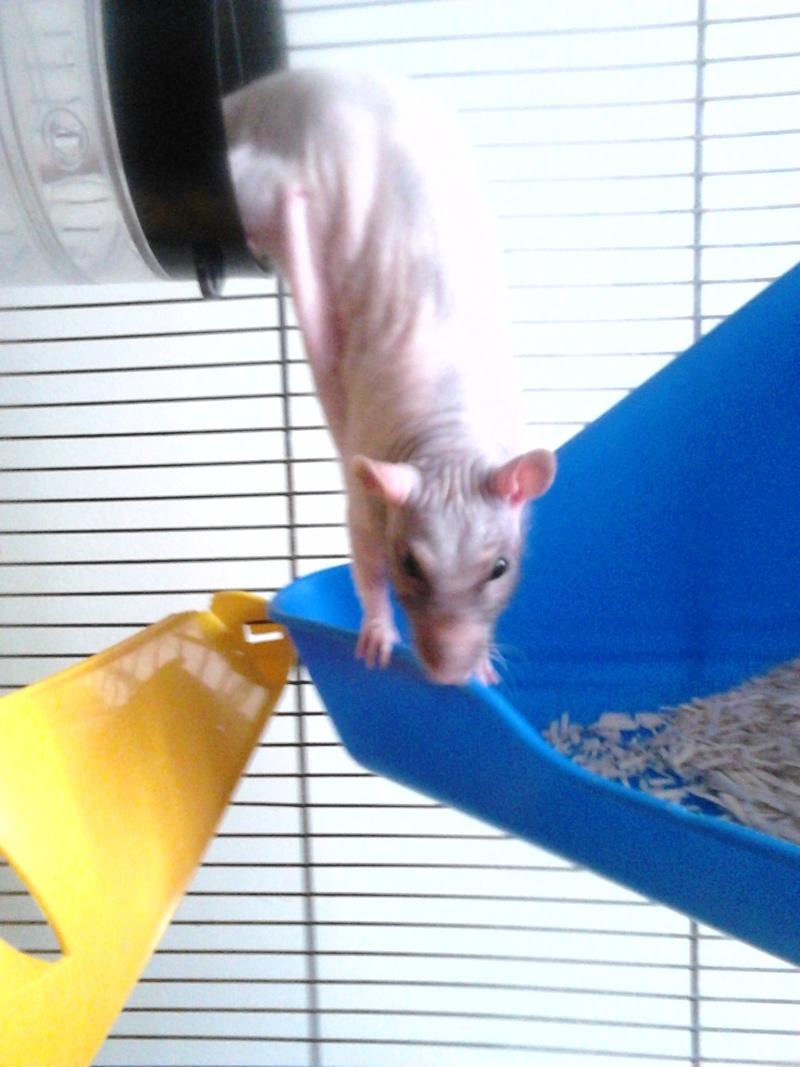 Les ratons de Random Dsc_0010
