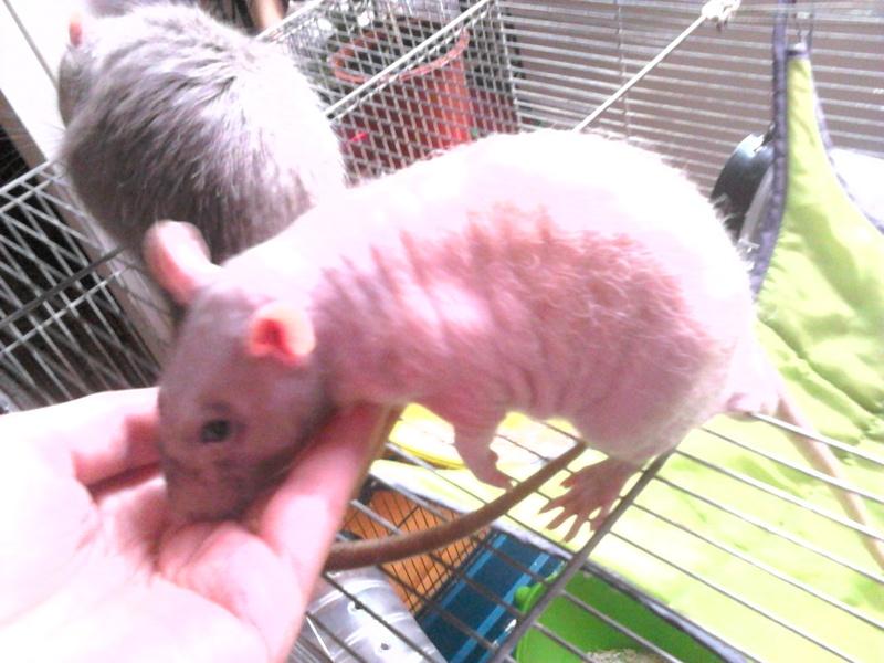 Les ratons de Random Dsc_0011