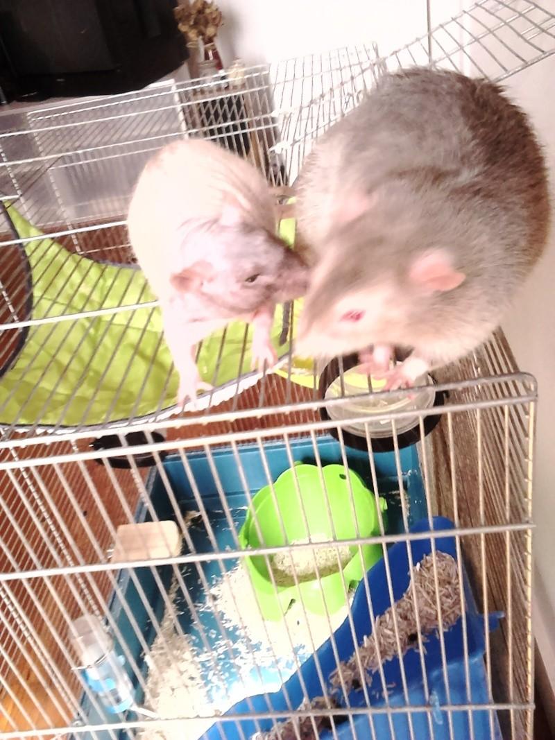 Les ratons de Random Dsc_0012