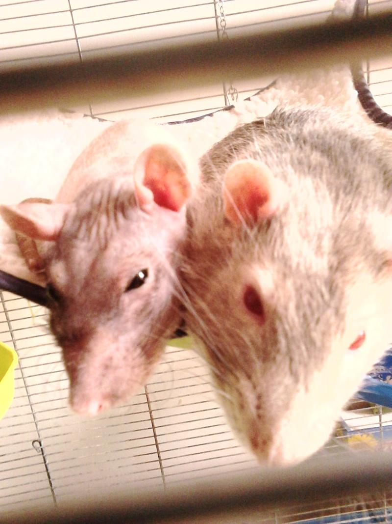 Les ratons de Random Dsc_0014