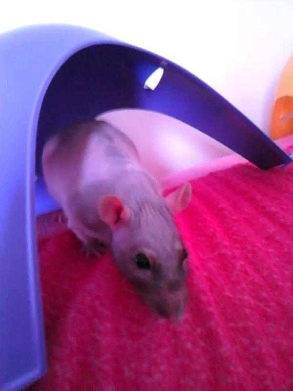 Les ratons de Random Vlcsna10