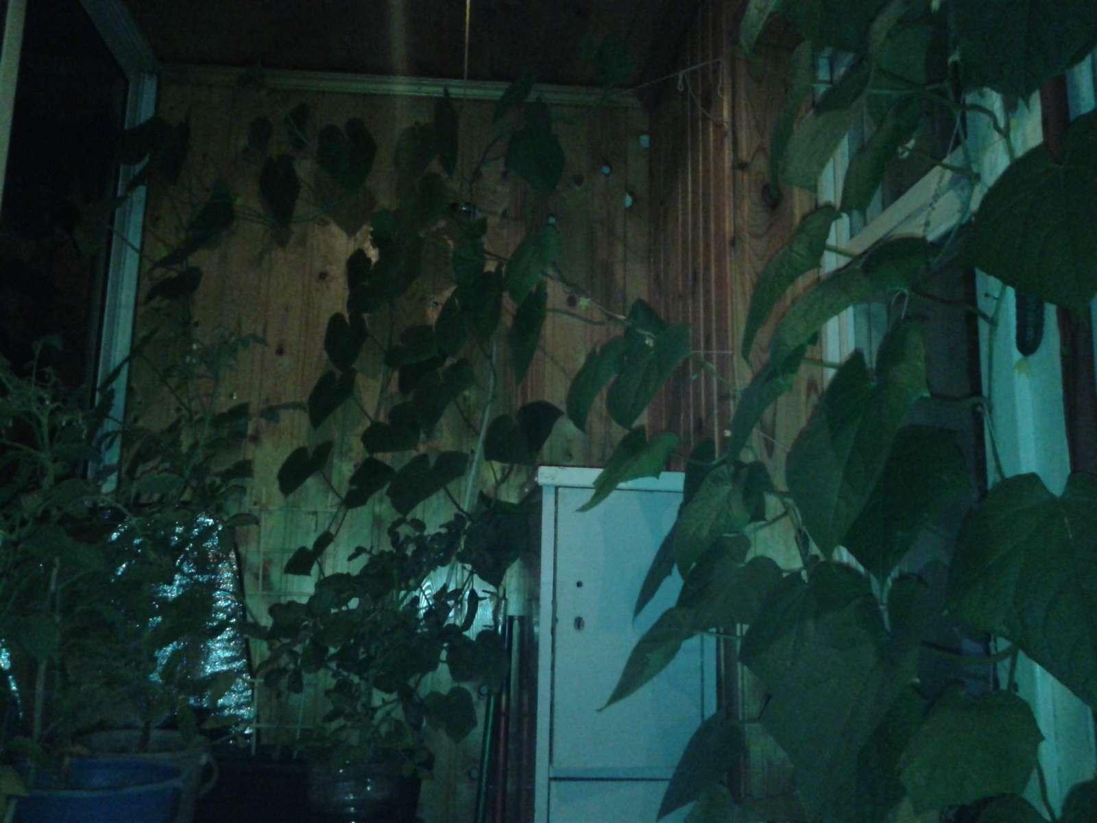 Садовые товарищи - Страница 2 Aia-0117