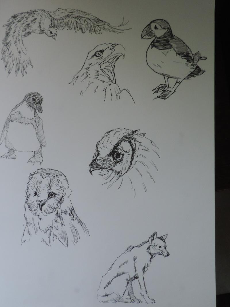 Les gribouilles d'Atna: objectif landscape et persos - Page 5 Dscn0611