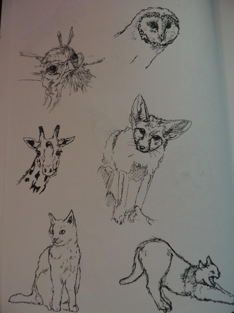 Les gribouilles d'Atna: objectif landscape et persos - Page 5 Dscn0613