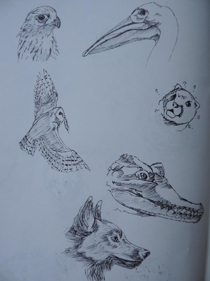Les gribouilles d'Atna: objectif landscape et persos - Page 6 Dscn0615