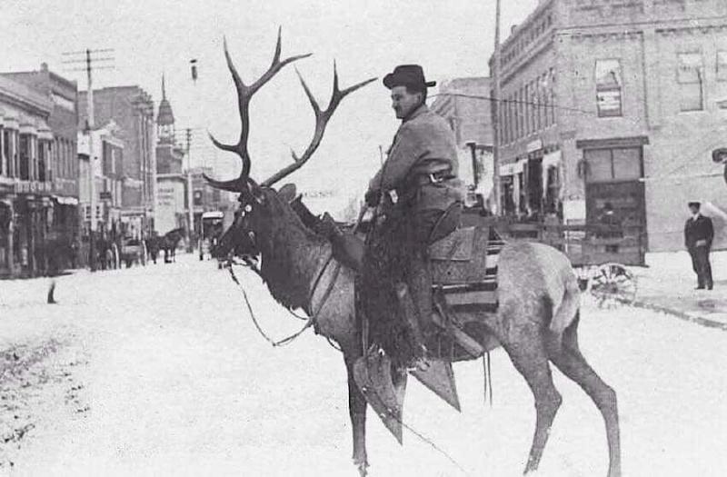 Merry Christmas to all Elk_sa10