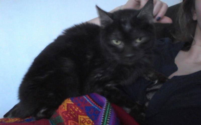 Jinny, femelle type européenne noire estimée née 01/04/2013 - Page 2 Snapch10