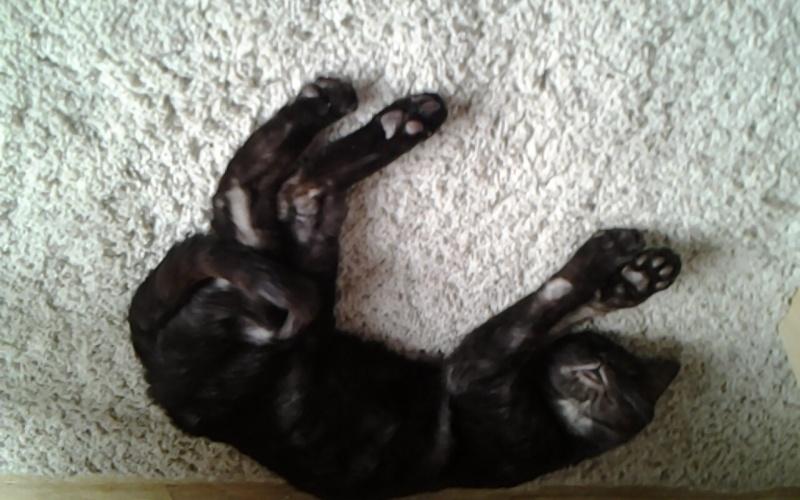 Jinny, femelle type européenne noire estimée née 01/04/2013 - Page 2 Snapch11