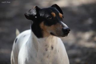 BILBO - Bodeguero - Né en Juin 2010 Bilbo_10